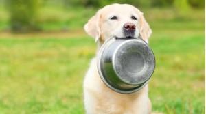 Anche cani e gatti soffrono di ipersensibilità alimentari. Cosa fare?